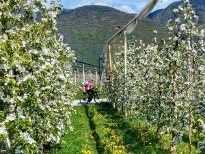 Impressionen zur Apfelblüte_24